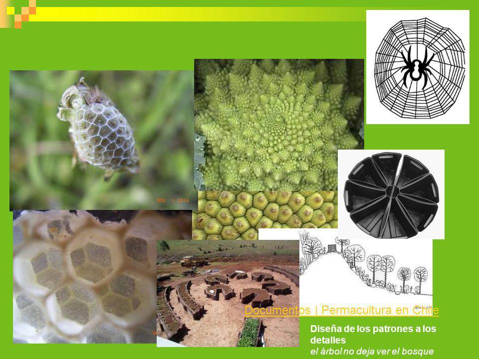 Diseña de los patrones a los detalles el árbol no deja ver el bosque Documentos | Permacultura en Chile