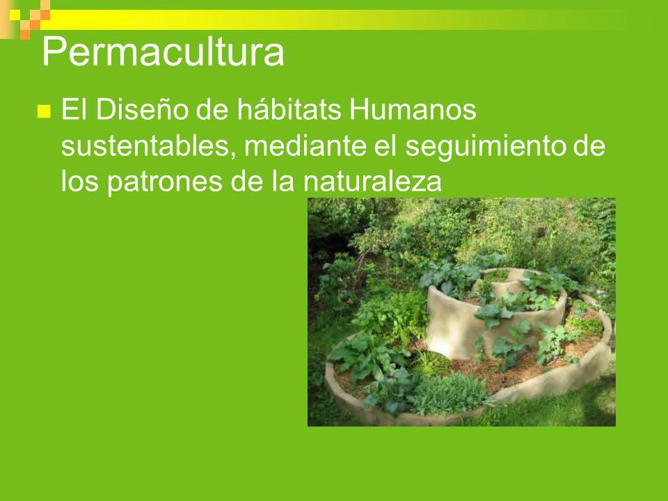 Diseña de los patrones a los detalles el árbol no deja ver el bosque Documentos   Permacultura en Chile