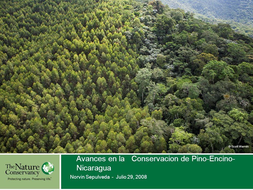 © Scott Warren Avances en la Conservacion de Pino-Encino- Nicaragua Norvin Sepulveda - Julio 29, 2008