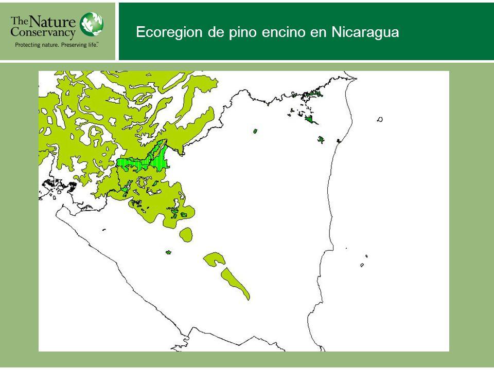 Ecoregion de pino encino en Nicaragua