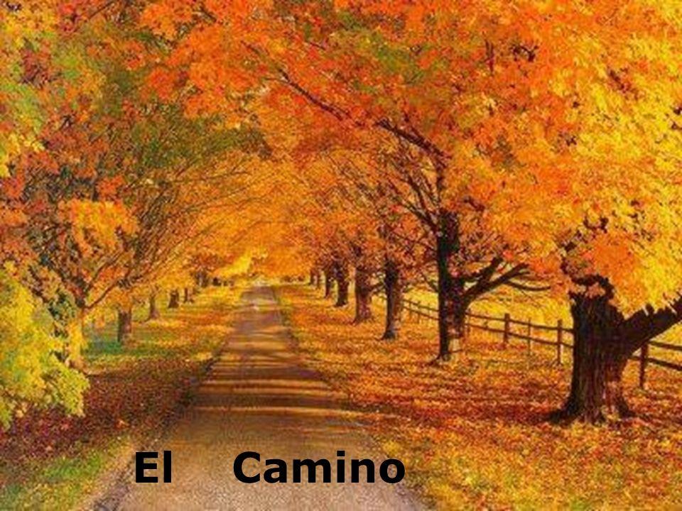 El Camino