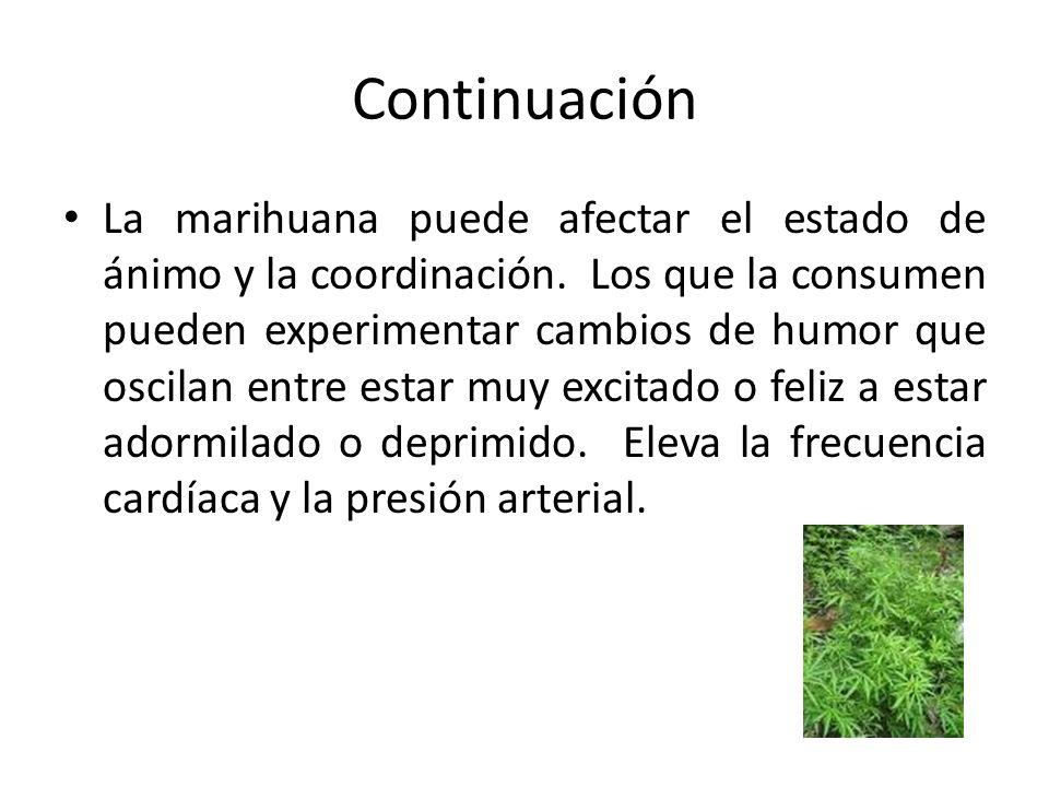 Continuación La marihuana puede afectar el estado de ánimo y la coordinación. Los que la consumen pueden experimentar cambios de humor que oscilan ent
