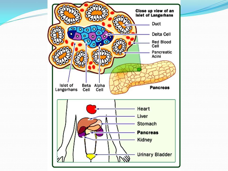 Carbohidratos simples (refinados y azucarados) = muchas calorías.