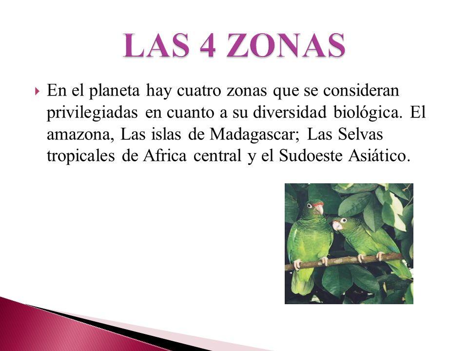 En el planeta hay cuatro zonas que se consideran privilegiadas en cuanto a su diversidad biológica. El amazona, Las islas de Madagascar; Las Selvas tr