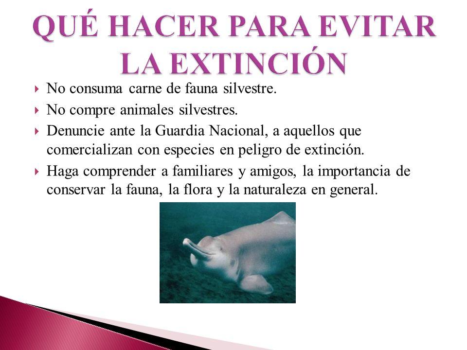 No consuma carne de fauna silvestre. No compre animales silvestres. Denuncie ante la Guardia Nacional, a aquellos que comercializan con especies en pe