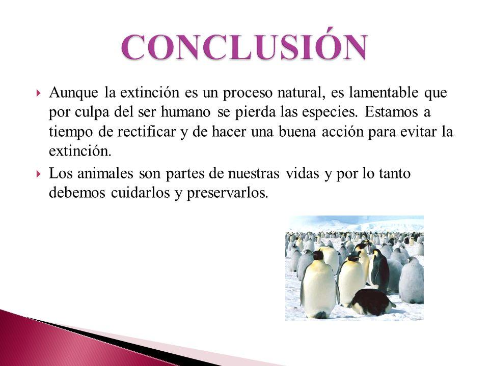 Aunque la extinción es un proceso natural, es lamentable que por culpa del ser humano se pierda las especies. Estamos a tiempo de rectificar y de hace