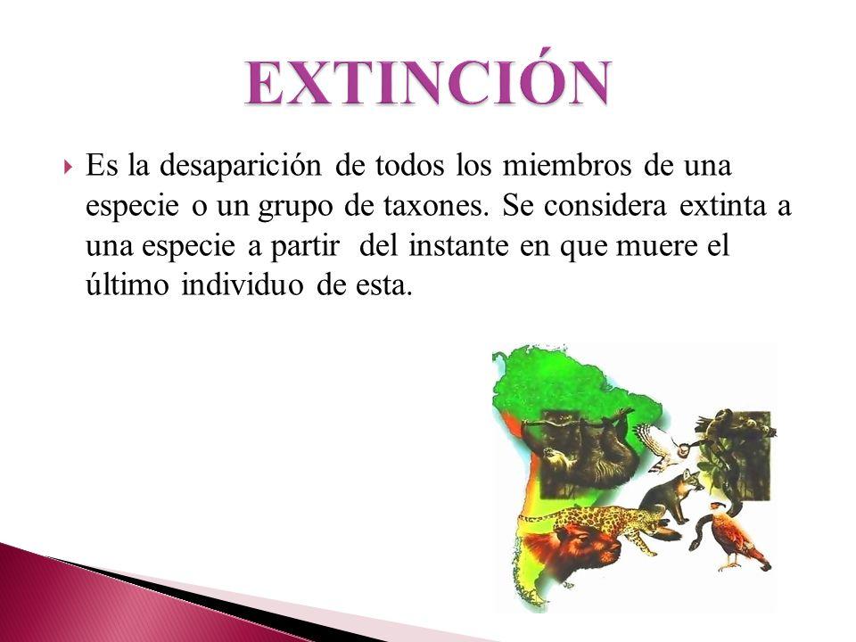 Es la desaparición de todos los miembros de una especie o un grupo de taxones. Se considera extinta a una especie a partir del instante en que muere e