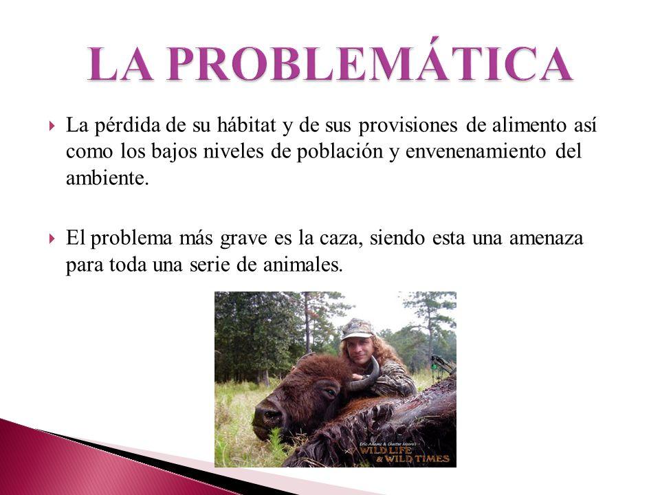La mayor causa se debe a la alteración del hábitat en el proceso de convertir, fraccionar y simplificar el uso de la tierra.