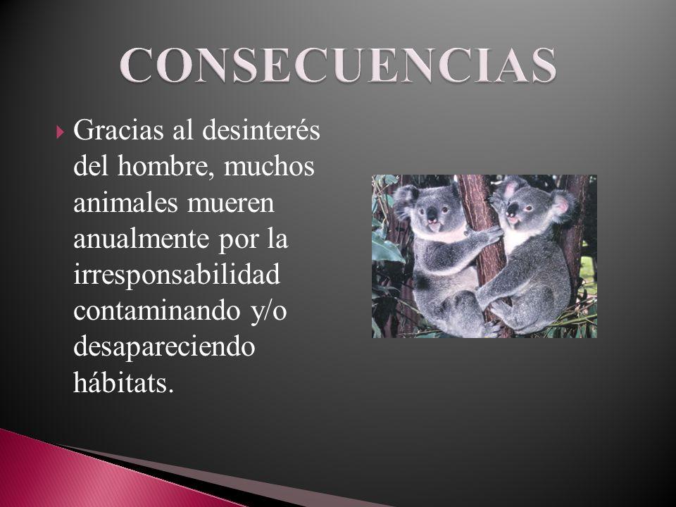 Gracias al desinterés del hombre, muchos animales mueren anualmente por la irresponsabilidad contaminando y/o desapareciendo hábitats.