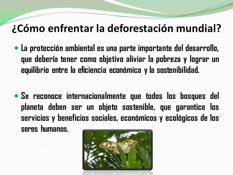 ¿Cómo enfrentar la deforestación mundial? La protección ambiental es una parte importante del desarrollo, que debería tener como objetivo aliviar la p