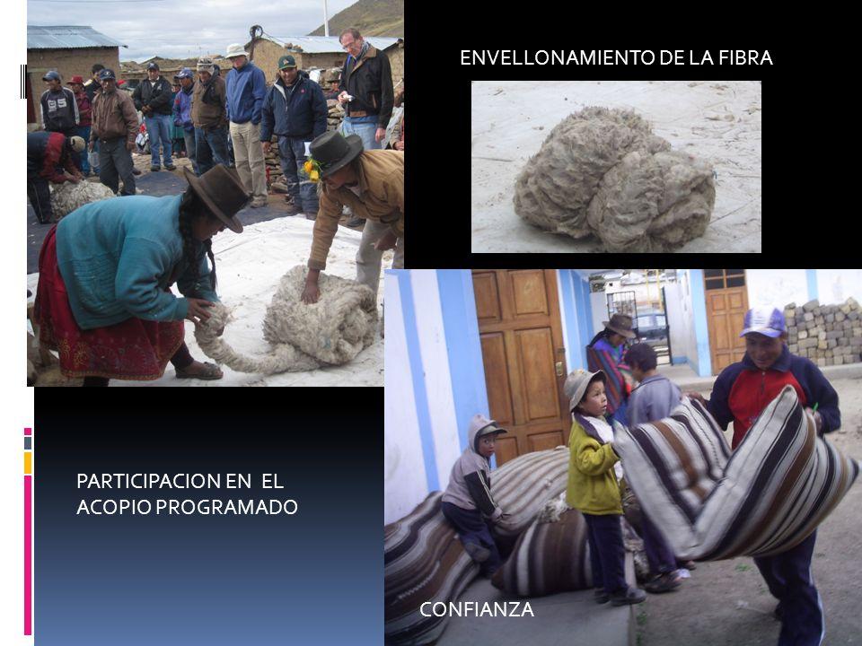 ENVELLONAMIENTO DE LA FIBRA PARTICIPACION EN EL ACOPIO PROGRAMADO CONFIANZA