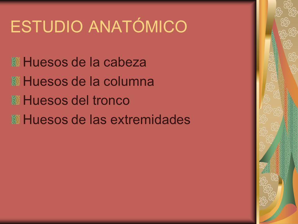 ESTUDIO ANATÓMICO Huesos de la cabeza Huesos de la columna Huesos del tronco Huesos de las extremidades