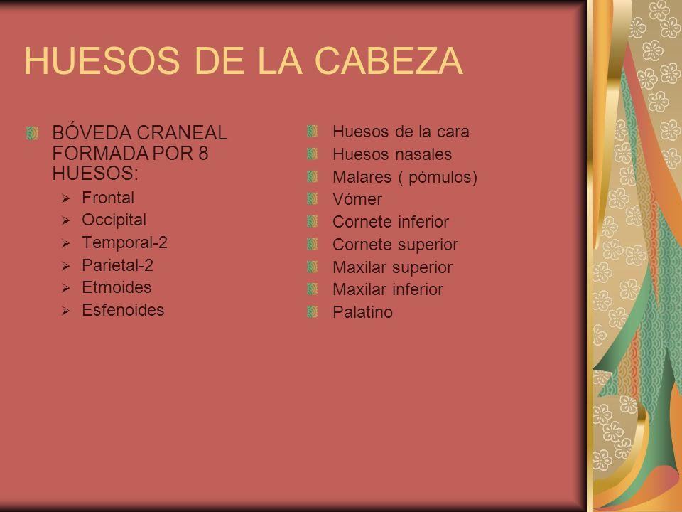 HUESOS DE LA CABEZA BÓVEDA CRANEAL FORMADA POR 8 HUESOS: Frontal Occipital Temporal-2 Parietal-2 Etmoides Esfenoides Huesos de la cara Huesos nasales