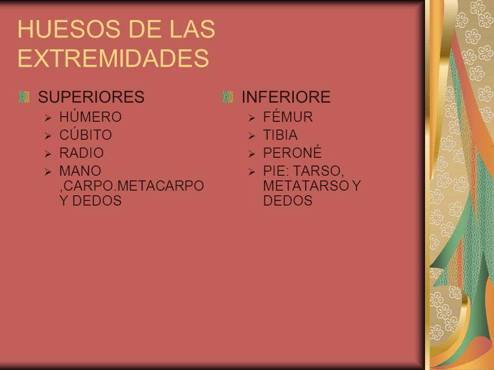HUESOS DE LAS EXTREMIDADES SUPERIORES HÚMERO CÚBITO RADIO MANO,CARPO.METACARPO Y DEDOS INFERIORE FÉMUR TIBIA PERONÉ PIE: TARSO, METATARSO Y DEDOS