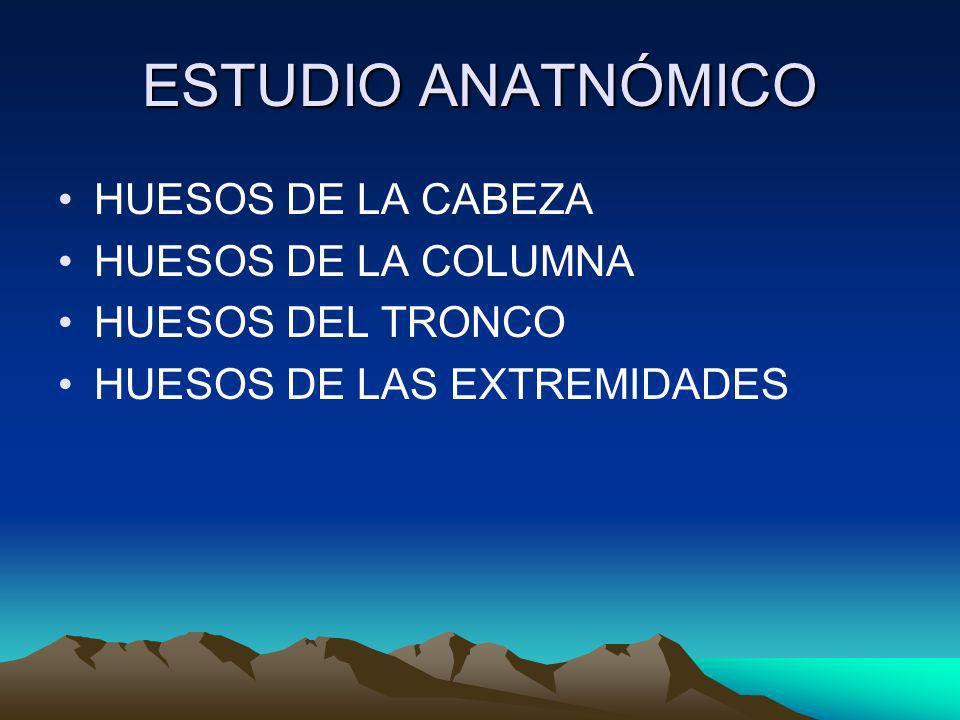 ESTUDIO ANATNÓMICO HUESOS DE LA CABEZA HUESOS DE LA COLUMNA HUESOS DEL TRONCO HUESOS DE LAS EXTREMIDADES