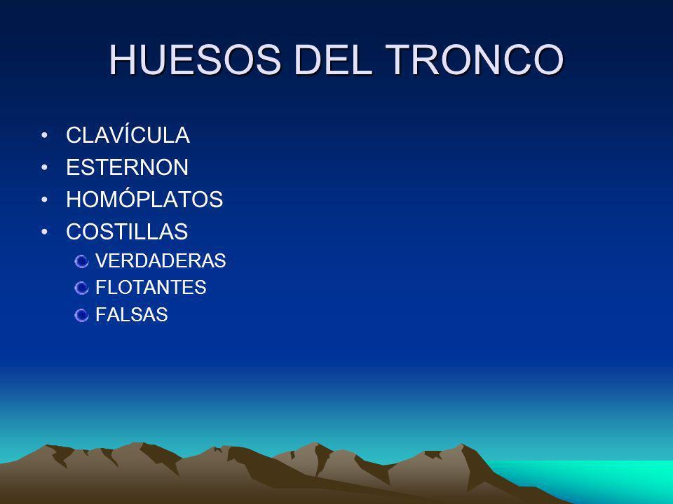 HUESOS DEL TRONCO CLAVÍCULA ESTERNON HOMÓPLATOS COSTILLAS VERDADERAS FLOTANTES FALSAS