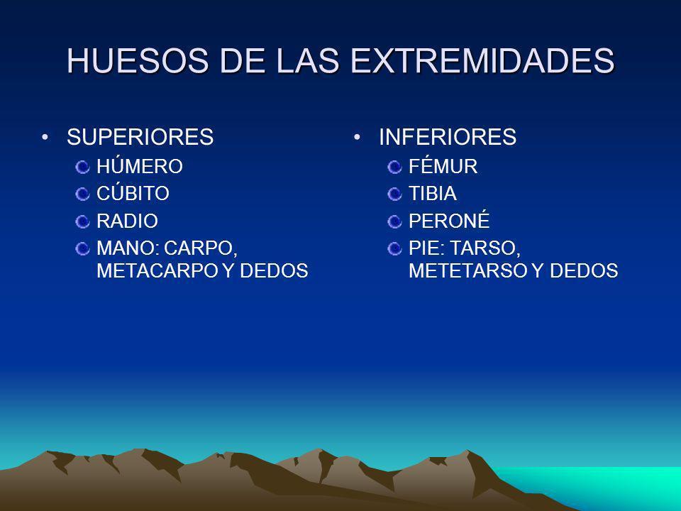 HUESOS DE LAS EXTREMIDADES SUPERIORES HÚMERO CÚBITO RADIO MANO: CARPO, METACARPO Y DEDOS INFERIORES FÉMUR TIBIA PERONÉ PIE: TARSO, METETARSO Y DEDOS