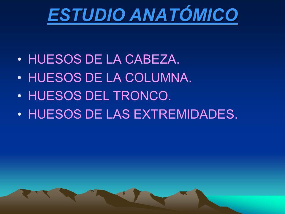 ESTUDIO ANATÓMICO HUESOS DE LA CABEZA. HUESOS DE LA COLUMNA. HUESOS DEL TRONCO. HUESOS DE LAS EXTREMIDADES.