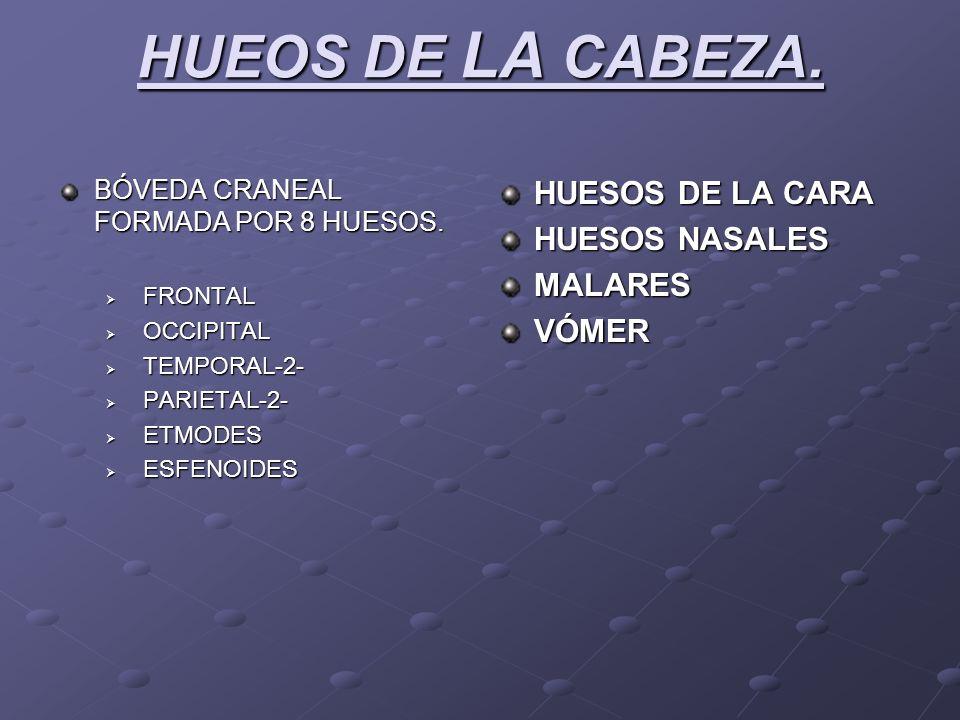 HUEOS DE LA CABEZA. BÓVEDA CRANEAL FORMADA POR 8 HUESOS. FRONTAL FRONTAL OCCIPITAL OCCIPITAL TEMPORAL-2- TEMPORAL-2- PARIETAL-2- PARIETAL-2- ETMODES E