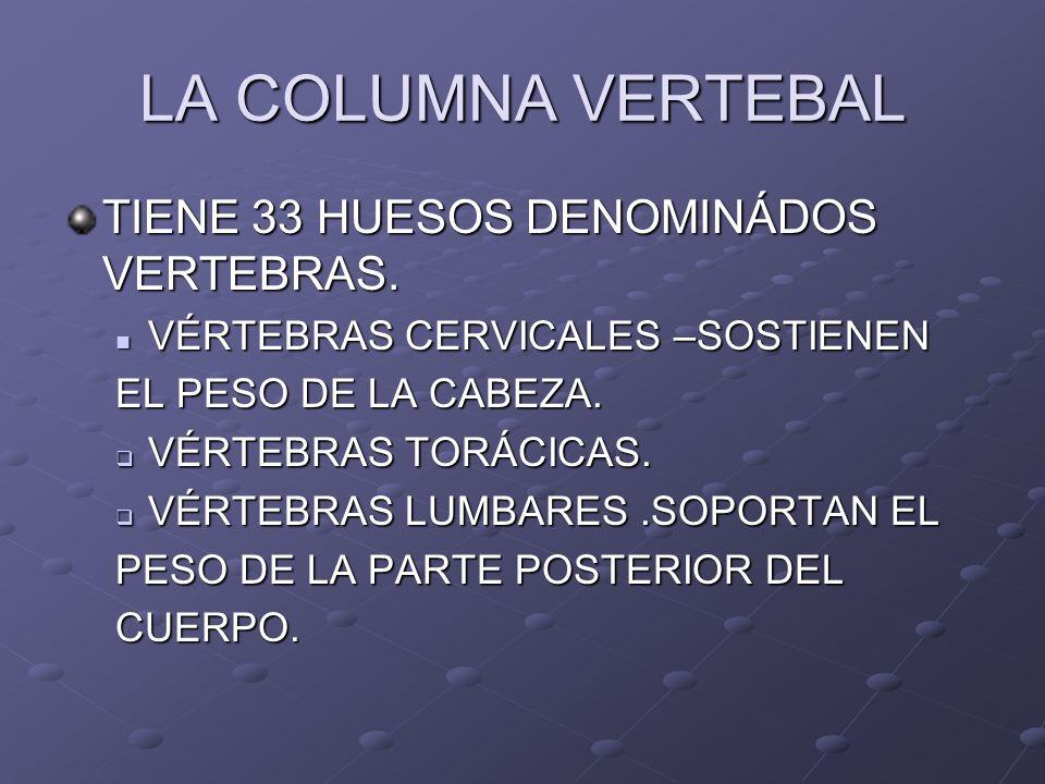 LA COLUMNA VERTEBAL TIENE 33 HUESOS DENOMINÁDOS VERTEBRAS. VÉRTEBRAS CERVICALES –SOSTIENEN VÉRTEBRAS CERVICALES –SOSTIENEN EL PESO DE LA CABEZA. VÉRTE