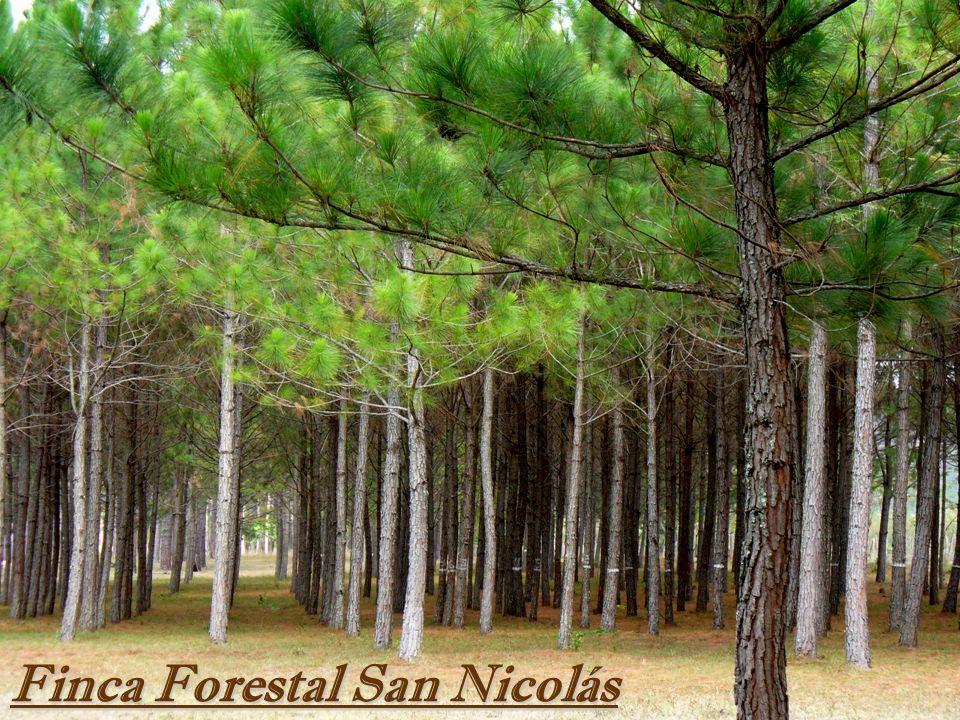 Finca Forestal San Nicolás