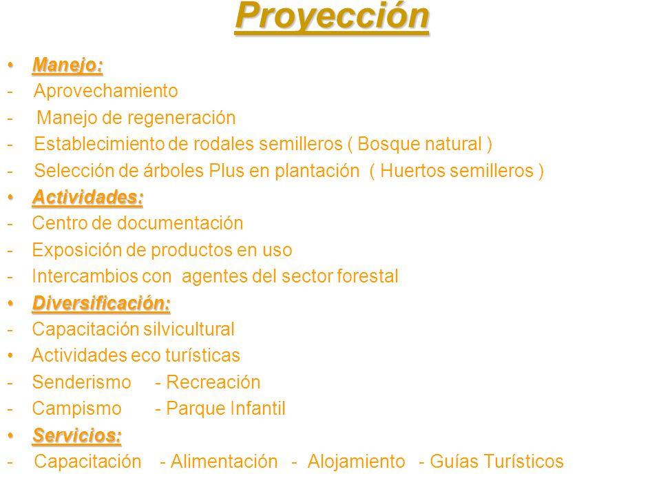 Proyección Manejo:Manejo: - Aprovechamiento - Manejo de regeneración - Establecimiento de rodales semilleros ( Bosque natural ) - Selección de árboles