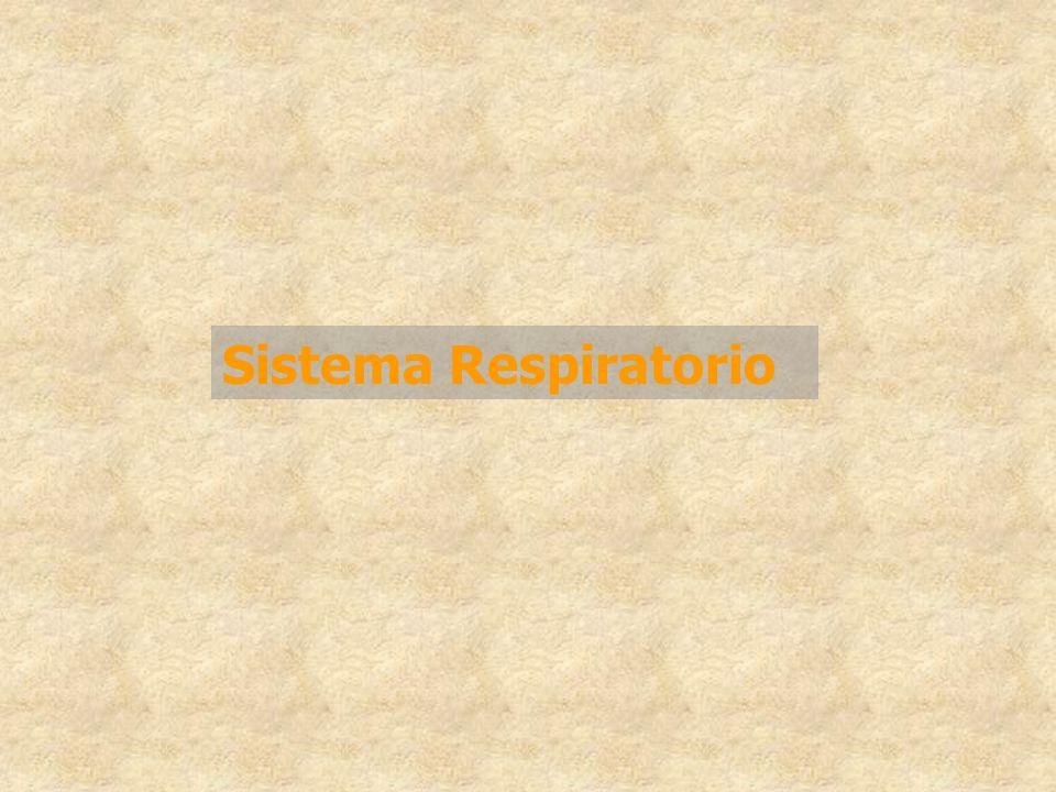 Funciones del aparato respiratorio Intercambio de gases –Oxígeno –Dióxido de carbono Defensa contra agentes ambientales -Tos -Sistema mucociliar -Macrófagos alveolares Metabolismo Sistema respiratorio