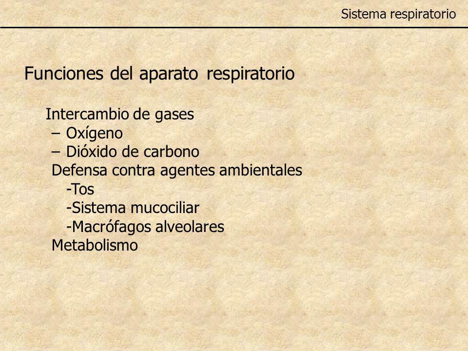 Funciones del aparato respiratorio Intercambio de gases –Oxígeno –Dióxido de carbono Defensa contra agentes ambientales -Tos -Sistema mucociliar -Macr