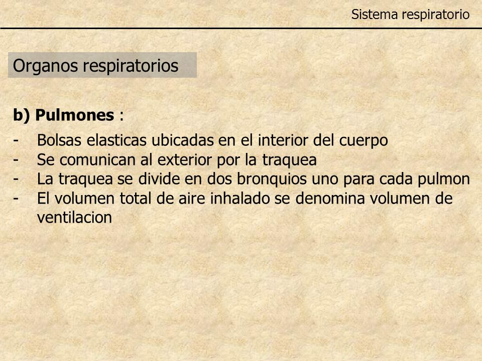 Organos respiratorios Sistema respiratorio b) Pulmones : -Bolsas elast i cas ub i cadas en el i nter i or del cuerpo -Se comun i can al exter i or por