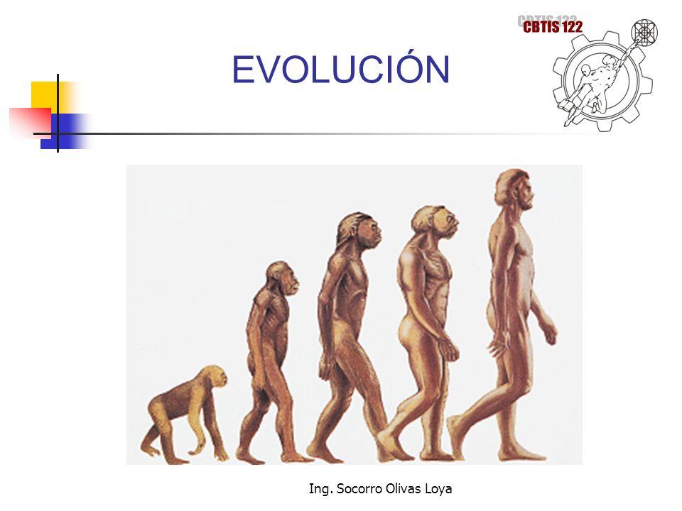 EVOLUCIÓN Ing. Socorro Olivas Loya