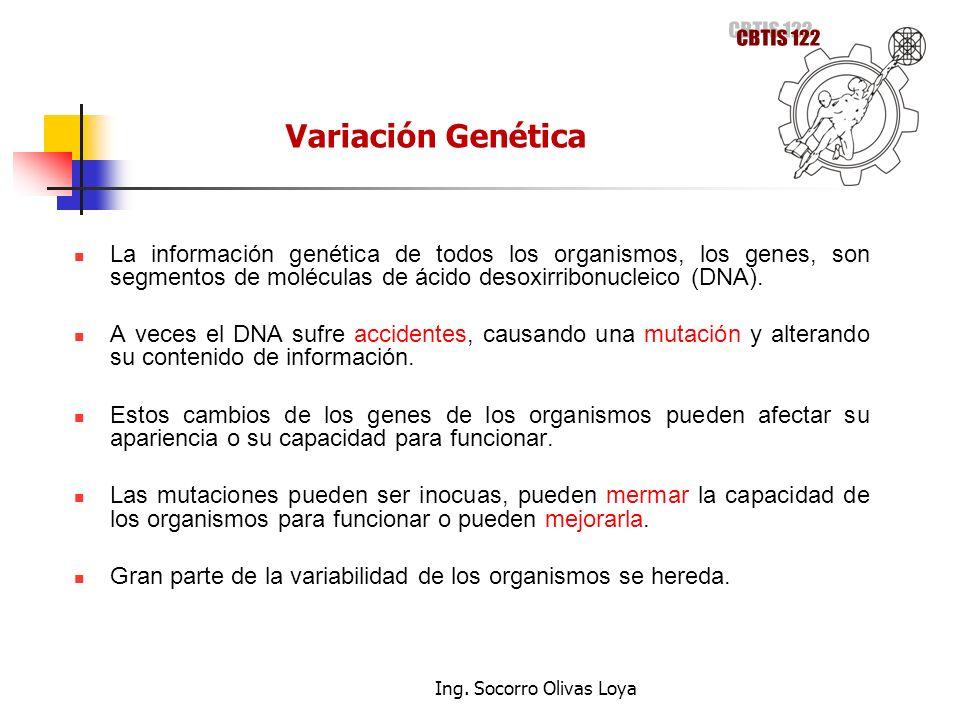 La información genética de todos los organismos, los genes, son segmentos de moléculas de ácido desoxirribonucleico (DNA). A veces el DNA sufre accide