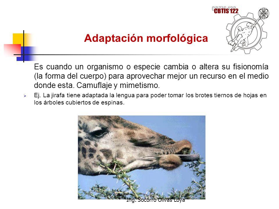 Adaptación morfológica Es cuando un organismo o especie cambia o altera su fisionomía (la forma del cuerpo) para aprovechar mejor un recurso en el med