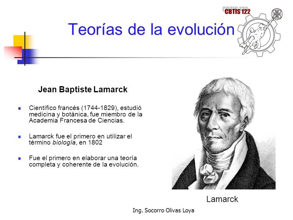Teorías de la evolución Jean Baptiste Lamarck Científico francés (1744-1829), estudió medicina y botánica, fue miembro de la Academia Francesa de Cien