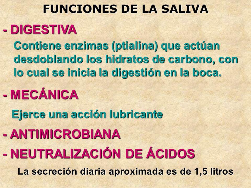 FUNCIONES DE LA SALIVA - DIGESTIVA - ANTIMICROBIANA - MECÁNICA - NEUTRALIZACIÓN DE ÁCIDOS Contiene enzimas (ptialina) que actúan desdoblando los hidra