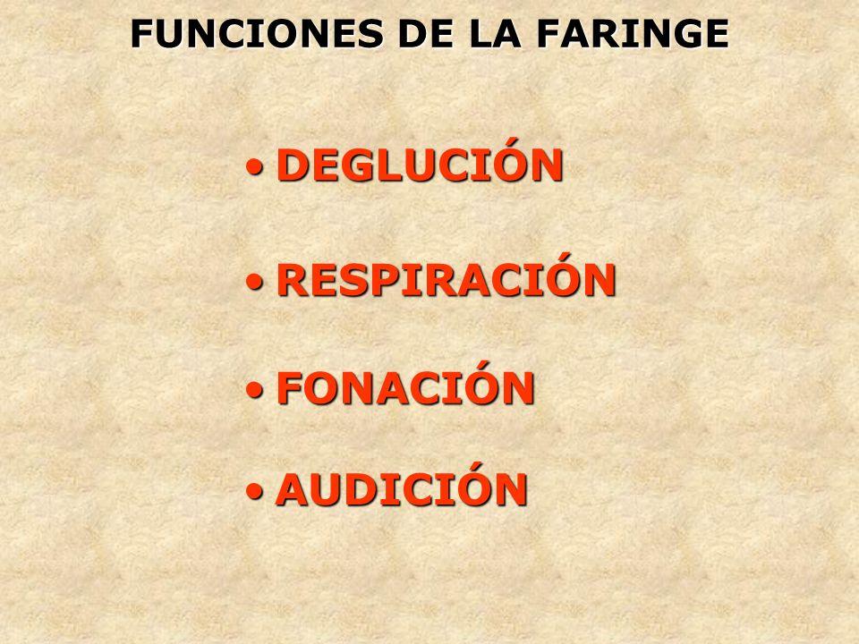 FUNCIONES DE LA FARINGE DEGLUCIÓNDEGLUCIÓN RESPIRACIÓNRESPIRACIÓN FONACIÓNFONACIÓN AUDICIÓNAUDICIÓN