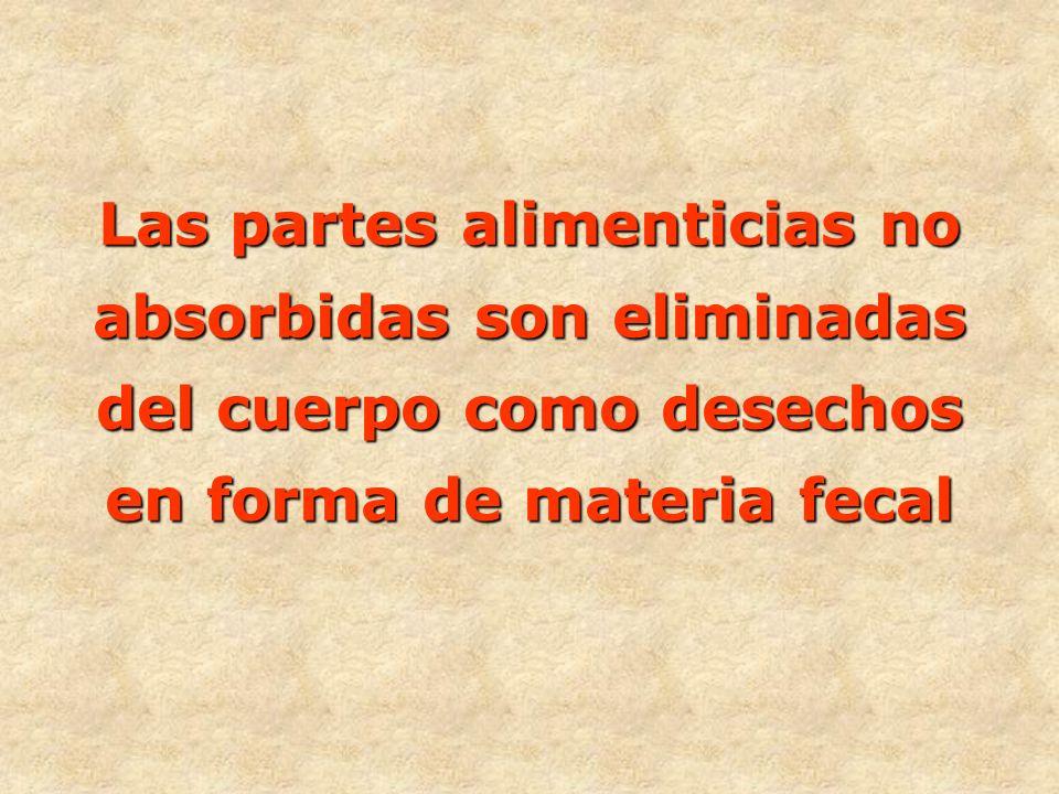 - DIGESTIÓN FÍSICA (mecánica) El intestino delgado realiza dos tipos de movimientos: Movimientos peristálticos Movimientos de segmentación A cargo de los músculos circulares Mediante los músculos longitudinales