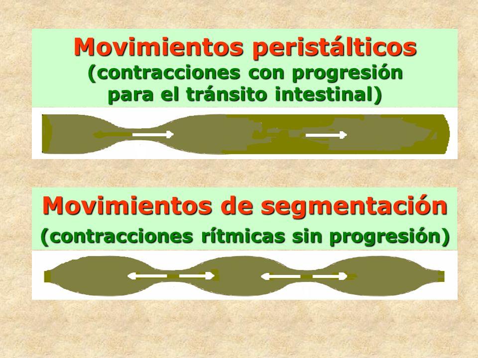 Movimientos de segmentación (contracciones rítmicas sin progresión) Movimientos peristálticos (contracciones con progresión para el tránsito intestina
