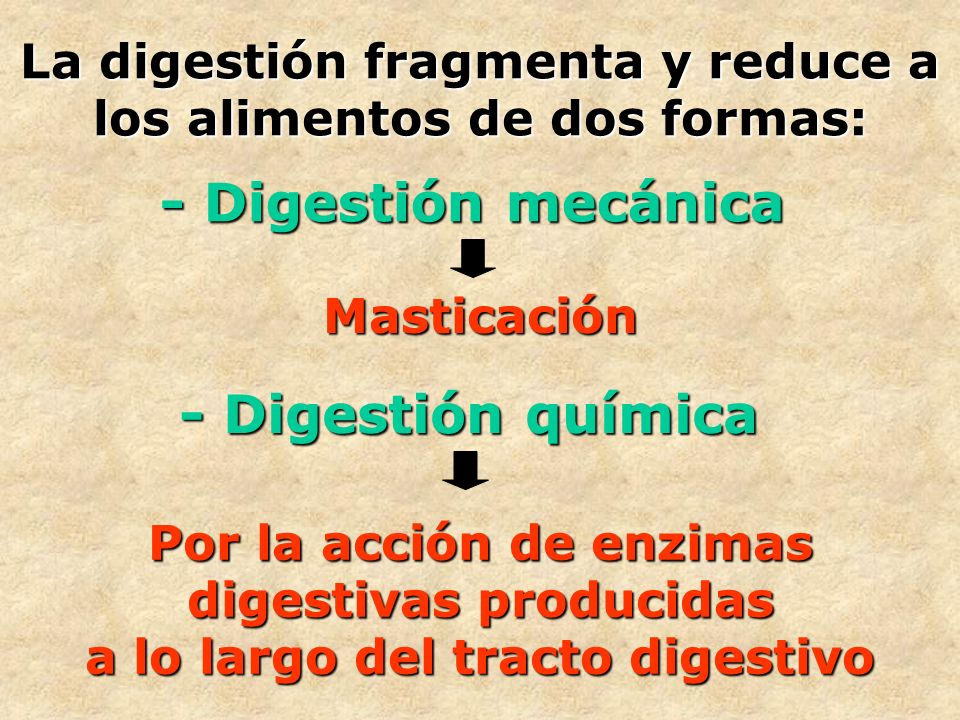 La digestión fragmenta y reduce a los alimentos de dos formas: - Digestión mecánica Masticación - Digestión química Por la acción de enzimas digestiva