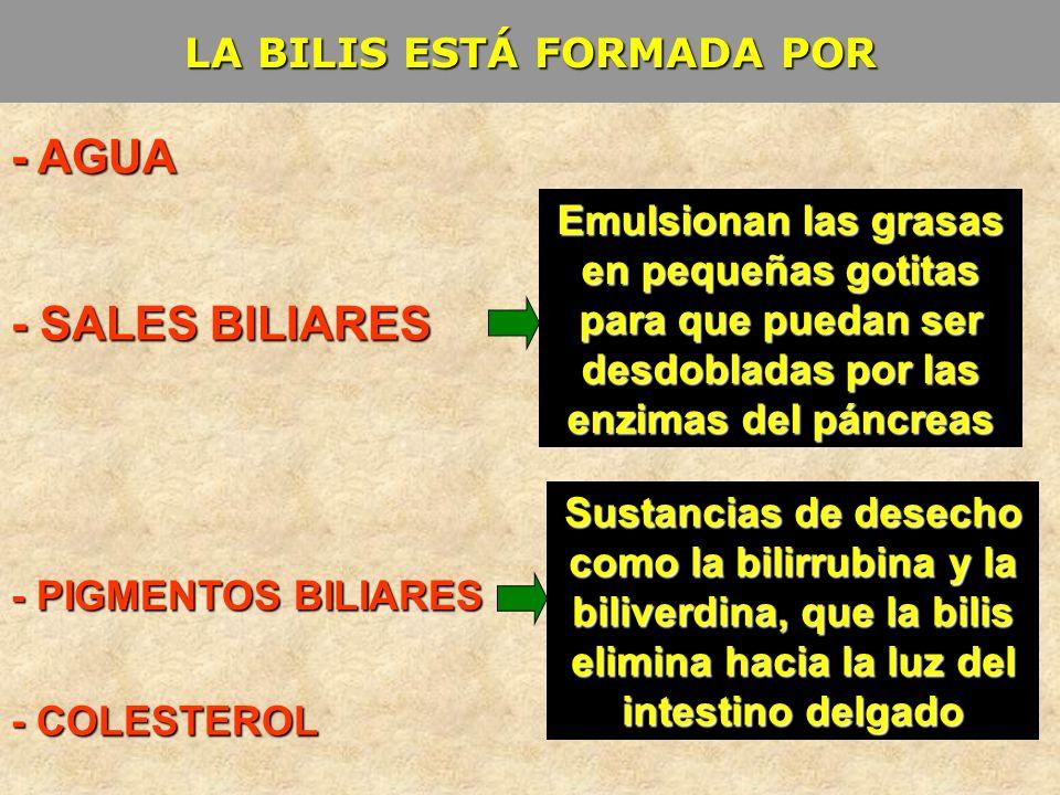 LA BILIS ESTÁ FORMADA POR - AGUA - SALES BILIARES - PIGMENTOS BILIARES - COLESTEROL Emulsionan las grasas en pequeñas gotitas para que puedan ser desd