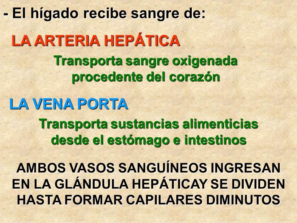 - El hígado recibe sangre de: LA ARTERIA HEPÁTICA LA VENA PORTA AMBOS VASOS SANGUÍNEOS INGRESAN EN LA GLÁNDULA HEPÁTICAY SE DIVIDEN HASTA FORMAR CAPIL