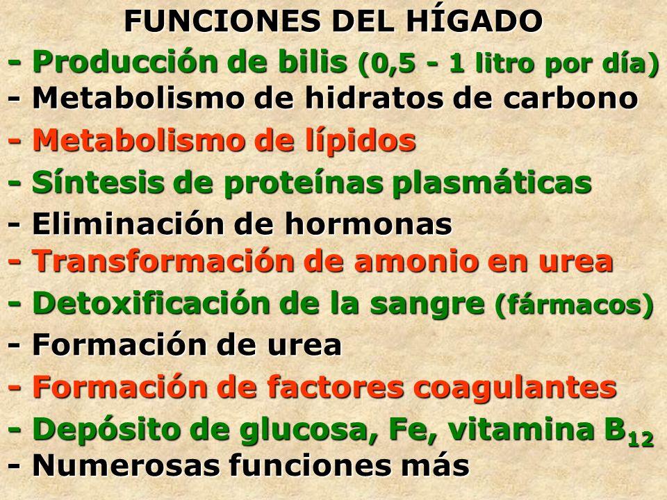 FUNCIONES DEL HÍGADO - Producción de bilis (0,5 - 1 litro por día) - Metabolismo de hidratos de carbono - Metabolismo de lípidos - Síntesis de proteín