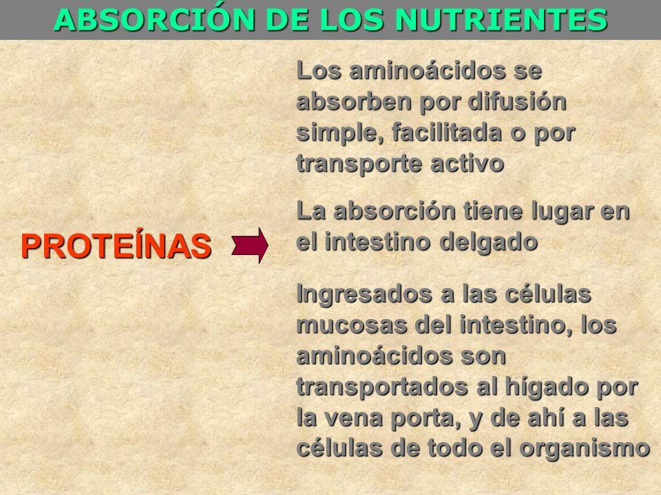 ABSORCIÓN DE LOS NUTRIENTES PROTEÍNAS Los aminoácidos se absorben por difusión simple, facilitada o por transporte activo La absorción tiene lugar en