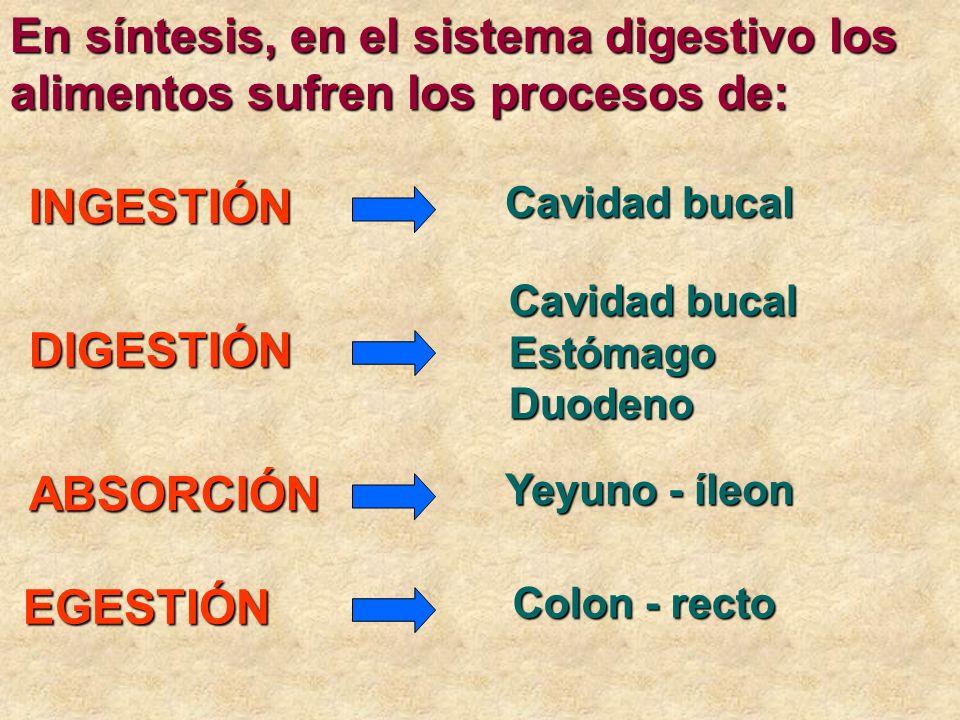 En síntesis, en el sistema digestivo los alimentos sufren los procesos de: INGESTIÓN DIGESTIÓN ABSORCIÓN EGESTIÓN EGESTIÓN Cavidad bucal EstómagoDuode