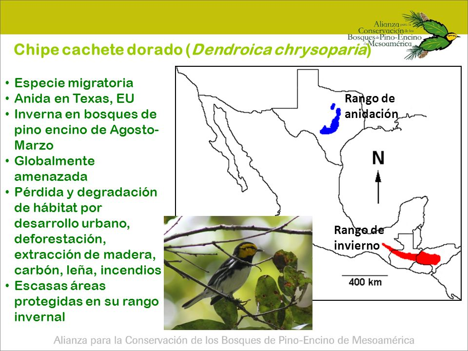 Pa í sN ú mero de sitios Superficie (ha) Guatemala5272,489.45 Honduras57113,000 M é xico 4774,000 Nicaragua914,000 El Salvador36,500