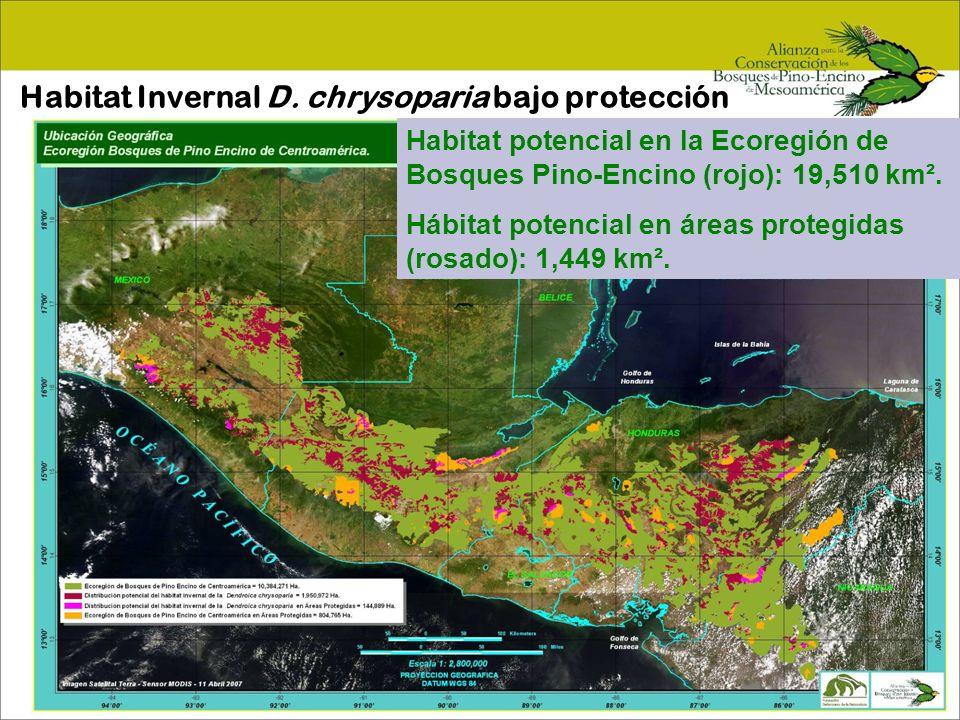 Antecedentes de la Alianza 1990-93 Pronatura Chiapas comienza estudios Dendroica chrysoparia en bosques de pino encino.