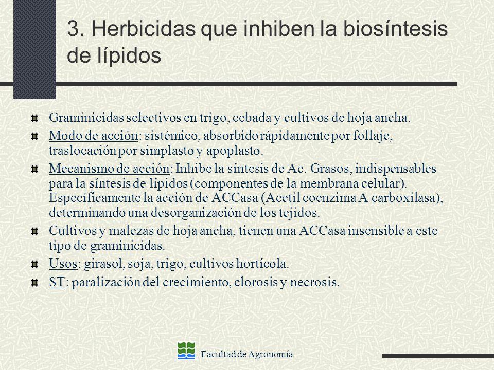 Facultad de Agronomía 3. Herbicidas que inhiben la biosíntesis de lípidos Graminicidas selectivos en trigo, cebada y cultivos de hoja ancha. Modo de a