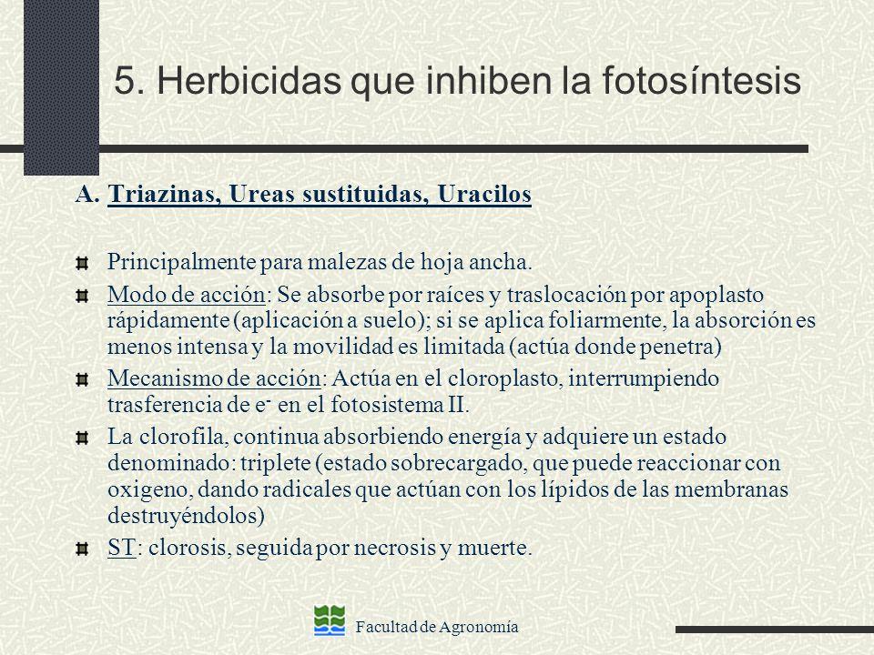 Facultad de Agronomía 5. Herbicidas que inhiben la fotosíntesis A. Triazinas, Ureas sustituidas, Uracilos Principalmente para malezas de hoja ancha. M