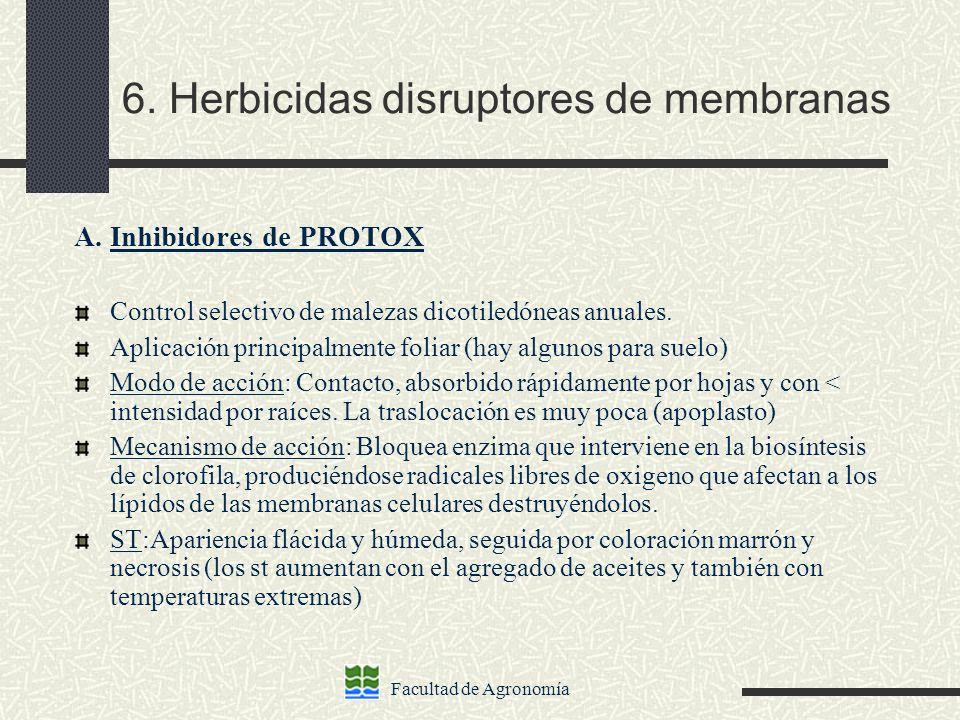 Facultad de Agronomía 6. Herbicidas disruptores de membranas A. Inhibidores de PROTOX Control selectivo de malezas dicotiledóneas anuales. Aplicación