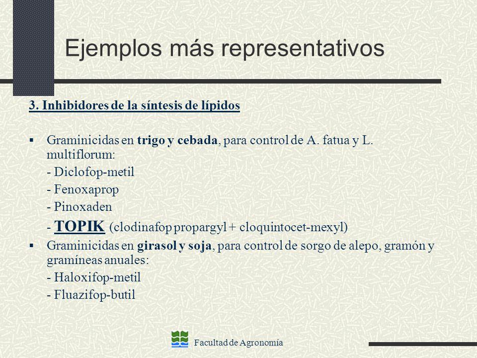 Facultad de Agronomía Ejemplos más representativos 3. Inhibidores de la síntesis de lípidos Graminicidas en trigo y cebada, para control de A. fatua y