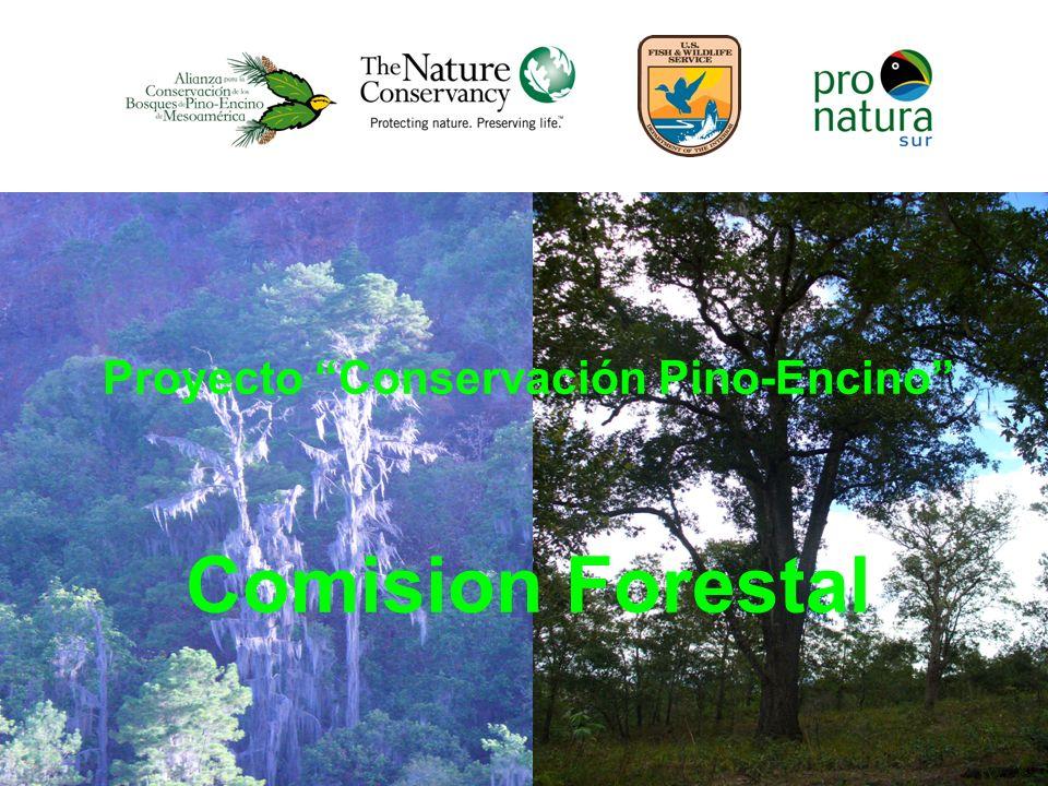 Proyecto Conservación Pino-Encino Comision Forestal
